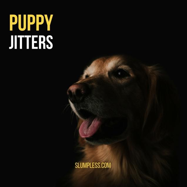 puppy-jitters